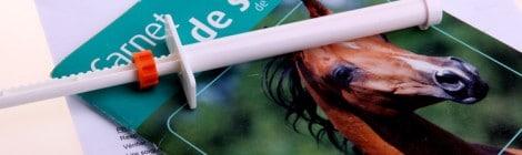Die häufigsten Pferdekrankheiten