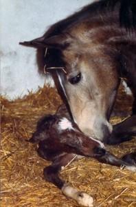Leibesfruchtversicherung Pferd