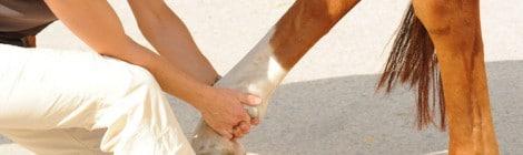 Pferde-Op Versicherung ohne Wartezeit