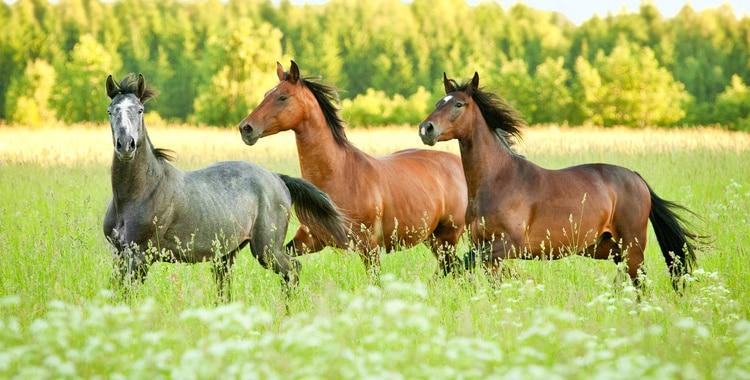 Fakten zur Pferdehaftpflichtversicherung