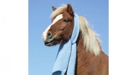 Pferdekrankenversicherung