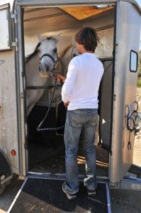 Pferdetransportversicherung