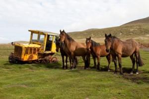 Unbrauchbarkeit beim Pferd