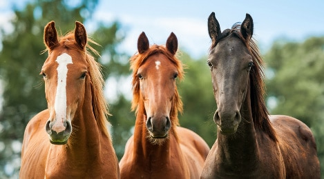 Pferdelebensversicherung sinnvoll