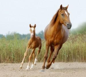 Op-Versicherung für Pferde
