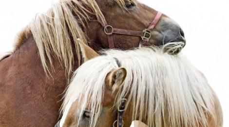 Pferde Op Versicherung wird oftmals unterschätzt