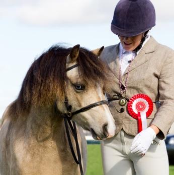 Pferdehaftpflicht Stiftung Warentest