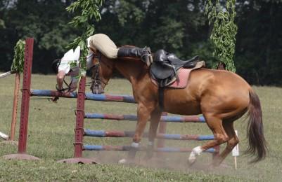 Sportpferde und Turnierpferde - Reiterunfallversicherung