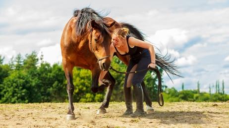 NEU: Uelzener Pferdekrankenversicherung mit 100%iger Erstattung