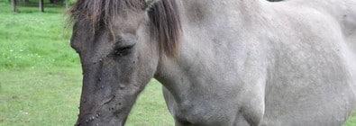 Pferdekrankenversicherung für ältere Pferde mit 100%iger Erstattung