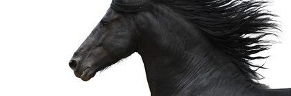 Pferdeversicherung für Friese