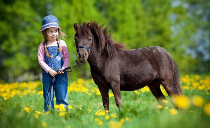 Pferdeversicherung für Shetlandpony