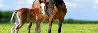 Pferdeversicherung für Baden-Württemberger